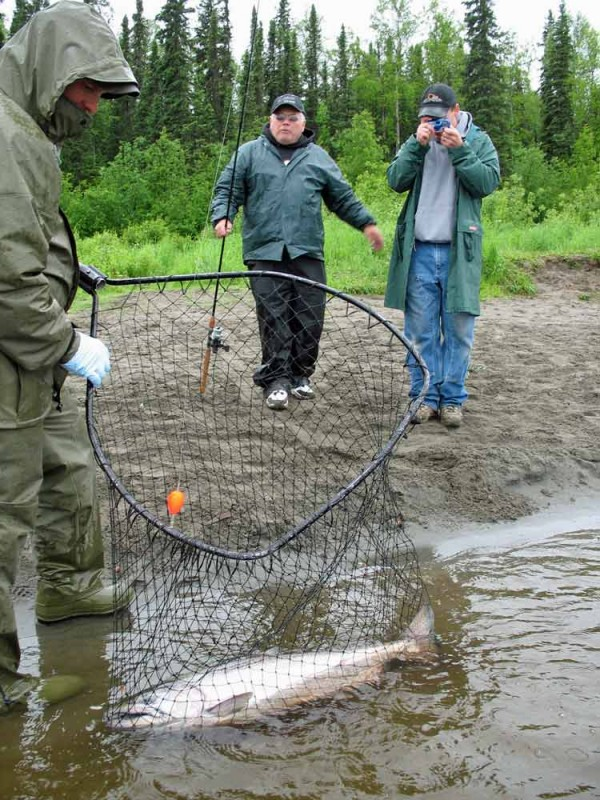 Alaska Salmon Fishing Guides - Fully Guided Salmon Trips